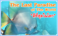 The Last Paradise of the world Raja Ampat